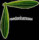 Arztpraxis Andrea Freudenhammer - Logo